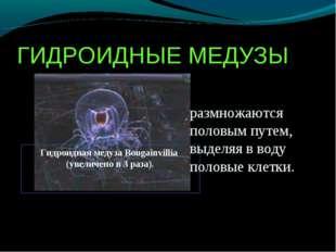ГИДРОИДНЫЕ МЕДУЗЫ Гидроидная медуза Bougainvillia (увеличено в 3 раза). Гидро