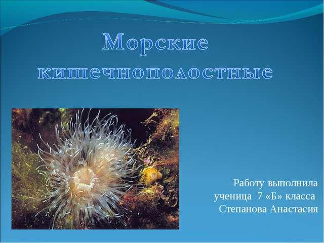 Работу выполнила ученица 7 «Б» класса Степанова Анастасия