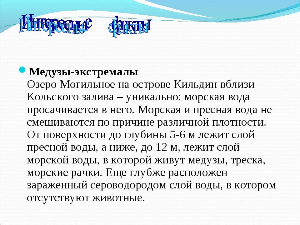 Медузы-экстремалы Озеро Могильное на острове Кильдин вблизи Кольского залива...