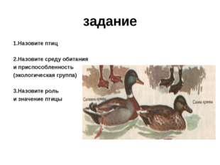 задание 1.Назовите птиц 2.Назовите среду обитания и приспособленность (эколог