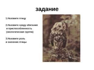 задание 1.Назовите птицу 2.Назовите среду обитания и приспособленность (эколо
