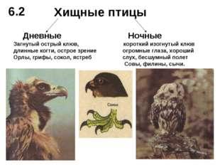 Хищные птицы Дневные Ночные Загнутый острый клюв, короткий изогнутый клюв дли