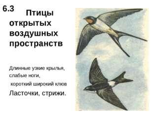 Птицы открытых воздушных пространств Длинные узкие крылья, слабые ноги, коро