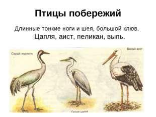 Птицы побережий Длинные тонкие ноги и шея, большой клюв. Цапля, аист, пеликан
