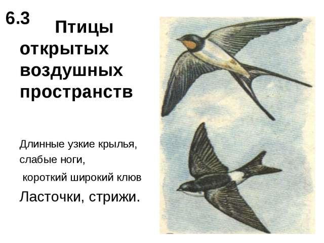 Птицы открытых воздушных пространств Длинные узкие крылья, слабые ноги, коро...
