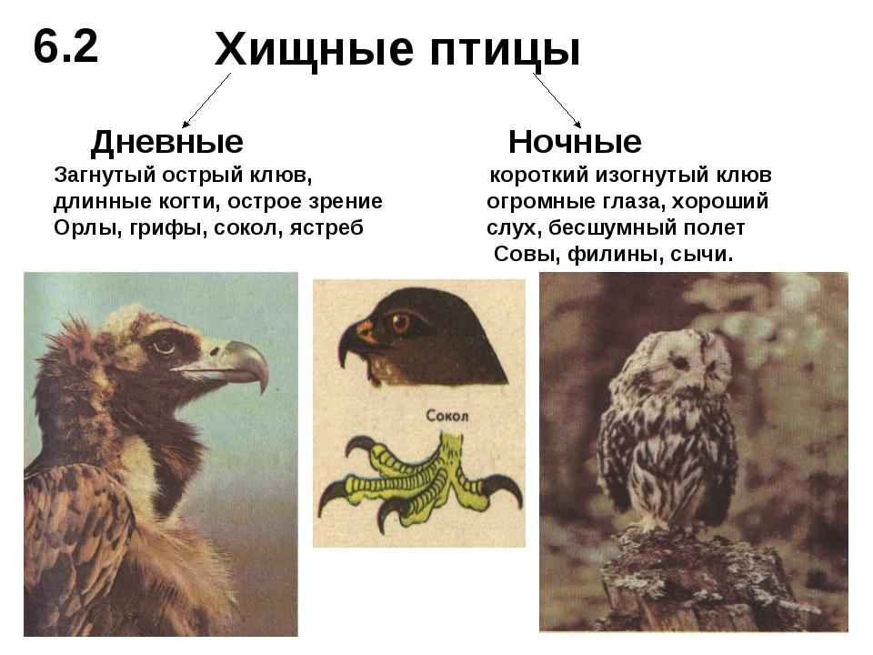 Хищные птицы Дневные Ночные Загнутый острый клюв, короткий изогнутый клюв дли...