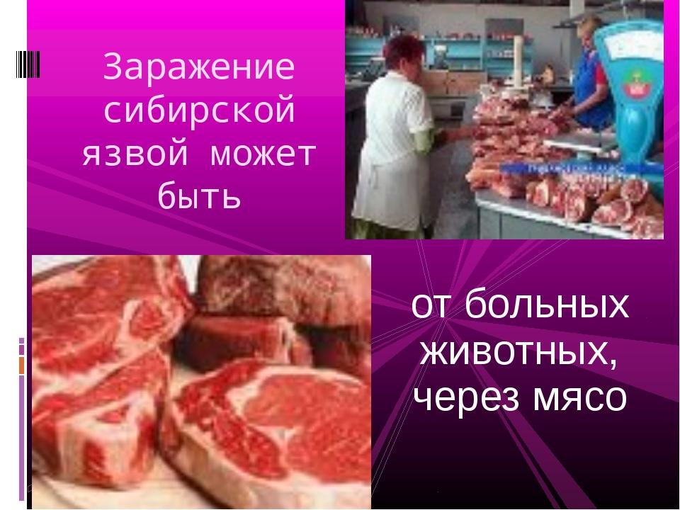 от больных животных, через мясо Заражение сибирской язвой может быть