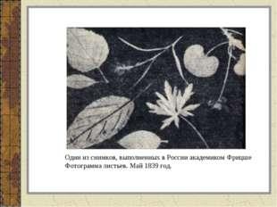 Один из снимков, выполненных в России академиком Фрицше Фотограмма листьев. М