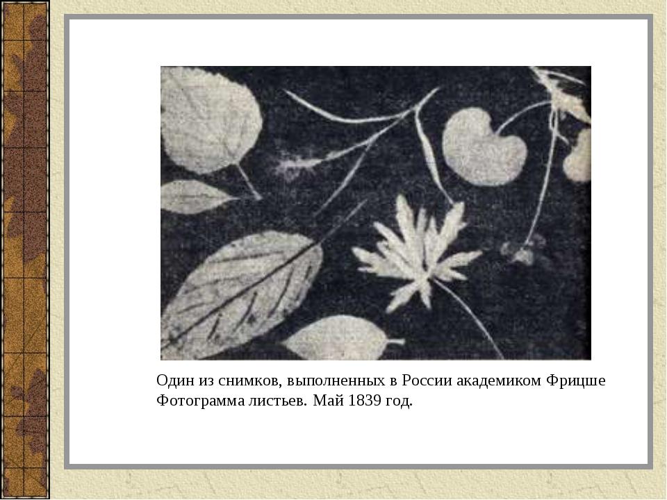 Один из снимков, выполненных в России академиком Фрицше Фотограмма листьев. М...