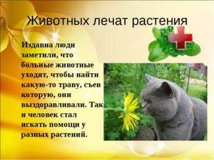 Животных лечат растения Издавна люди заметили, что больные животные уходят, ч