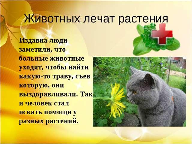 Животных лечат растения Издавна люди заметили, что больные животные уходят, ч...
