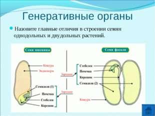 Генеративные органы Назовите главные отличия в строении семян однодольных и д