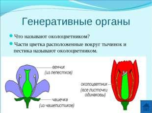 Генеративные органы Что называют околоцветником? Части цветка расположенные в