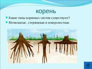 корень Какие типы корневых систем существуют? Мочковатая , стержневая и повер