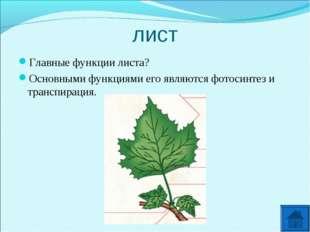 лист Главные функции листа? Основными функциями его являются фотосинтез и тра