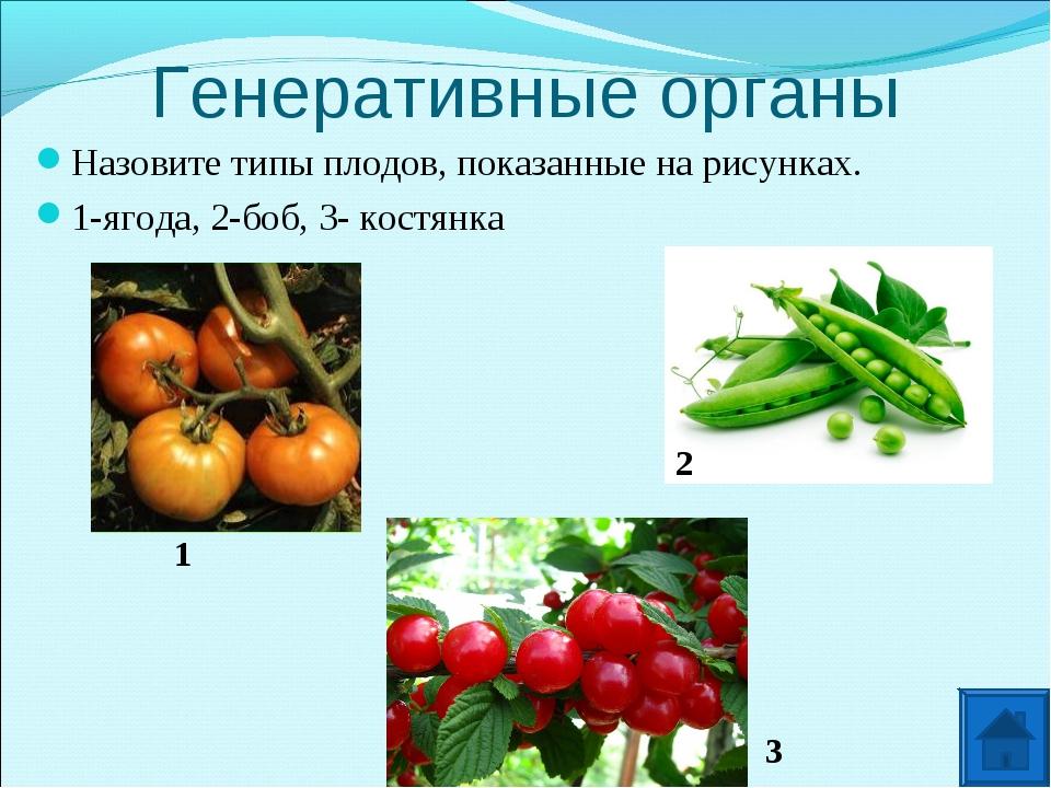 Генеративные органы Назовите типы плодов, показанные на рисунках. 1-ягода, 2-...