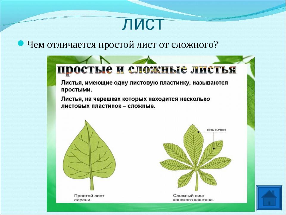 лист Чем отличается простой лист от сложного?