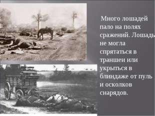 Много лошадей пало на полях сражений. Лошадь не могла спрятаться в траншеи и