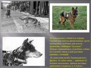 Использовались собаки и в отрядах Смерша для поиска диверсионных групп против