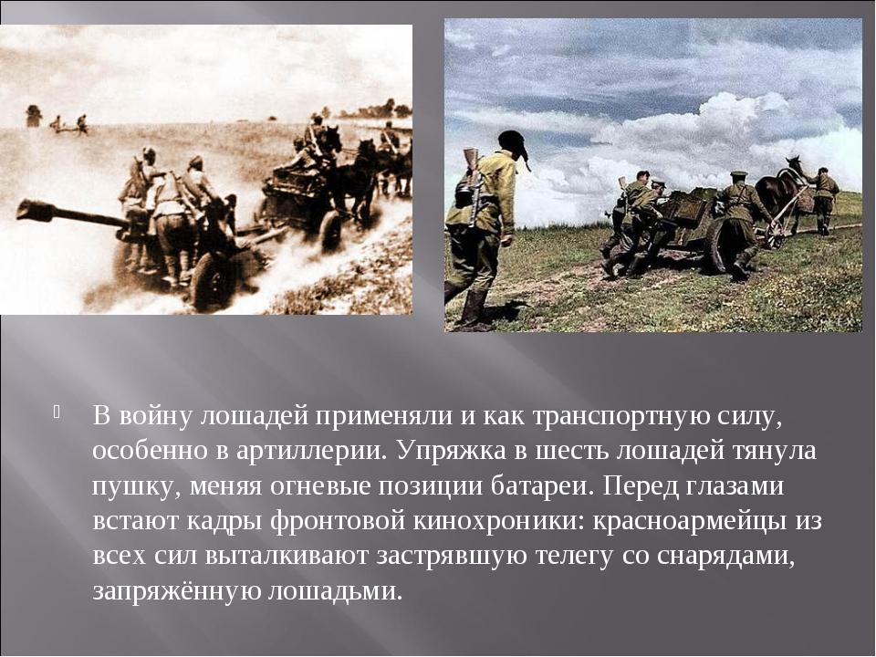 В войну лошадей применяли и как транспортную силу, особенно в артиллерии. Упр...