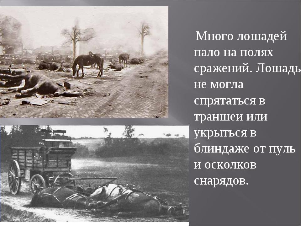 Много лошадей пало на полях сражений. Лошадь не могла спрятаться в траншеи и...