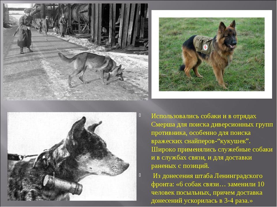 Использовались собаки и в отрядах Смерша для поиска диверсионных групп против...