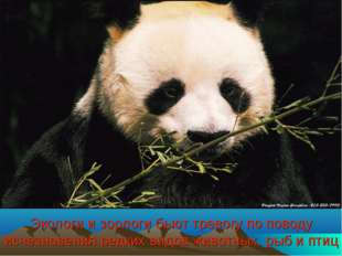 Экологи и зоологи бьют тревогу по поводу исчезновения редких видов животных,