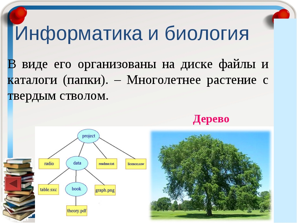 Информатика и биология В виде его организованы на диске файлы и каталоги (пап...