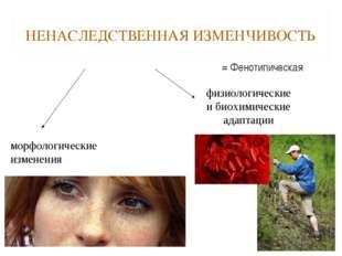 НЕНАСЛЕДСТВЕННАЯ ИЗМЕНЧИВОСТЬ = Фенотипическая морфологические изменения физи