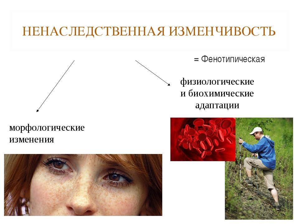 НЕНАСЛЕДСТВЕННАЯ ИЗМЕНЧИВОСТЬ = Фенотипическая морфологические изменения физи...