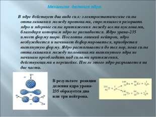 В ядре действует два вида сил: электростатические силы отталкивания между пр