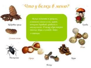 Что у белки в меню? Белки питаются орехами, семенами сосны и ели, корой, почк