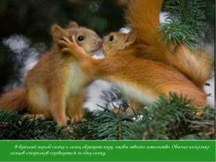 Ухаживание В брачный период самка и самец образуют пару, чтобы завести потомс