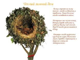 Теплый зимний дом Белки строят на зиму теплое гнездо из веточек и травинок. Т