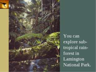 Company Logo You can explore sub-tropical rain-forest in Lamington National P