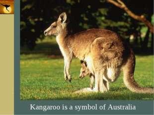 Company Logo Kangaroo is a symbol of Australia Company Logo www.themegallery.