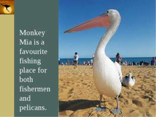 Company Logo Monkey Mia is a favourite fishing place for both fishermen and p