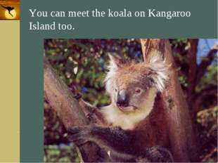 Company Logo You can meet the koala on Kangaroo Island too. Company Logo www.
