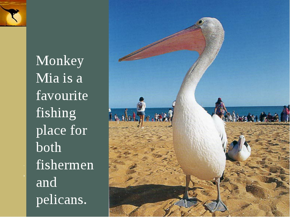 Company Logo Monkey Mia is a favourite fishing place for both fishermen and p...