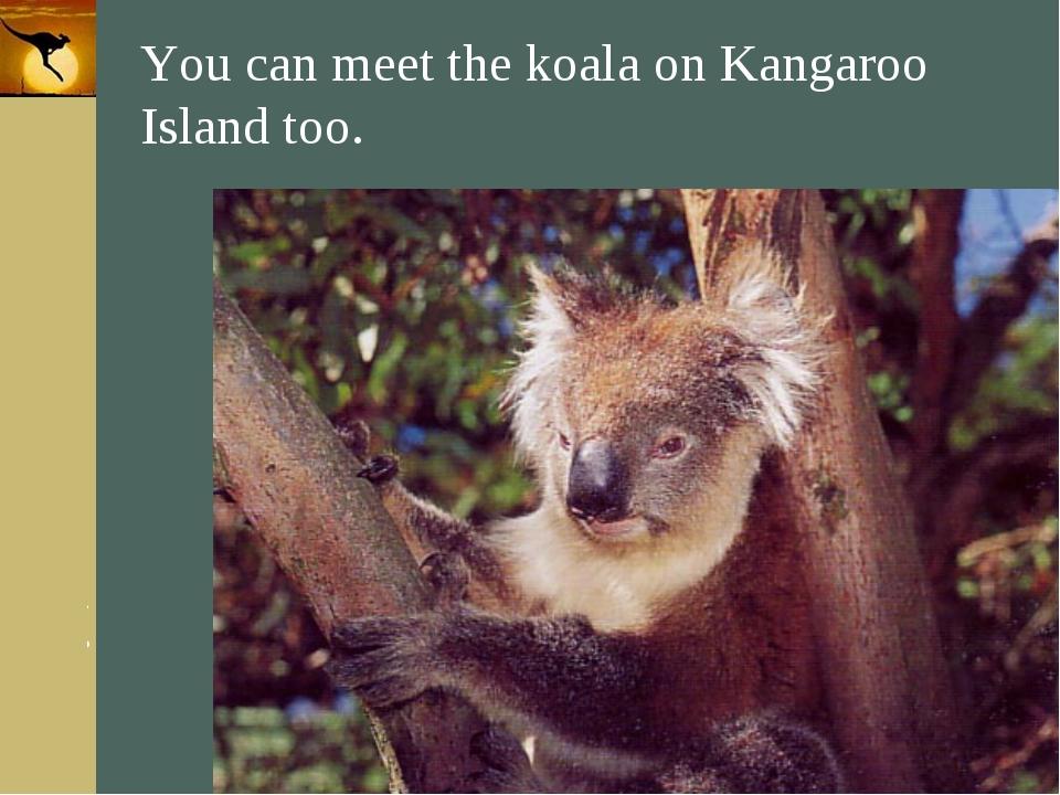 Company Logo You can meet the koala on Kangaroo Island too. Company Logo www....