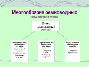 Многообразие земноводных (схему перечерти в тетрадь) Класс Земноводные 2400 в