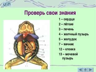 Проверь свои знания 1 – сердце 2 – лёгкие 3 – печень 4 – желчный пузырь 5 – ж