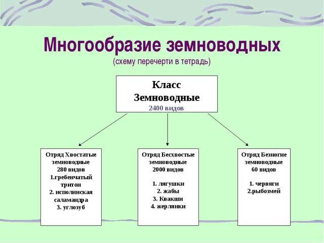 Многообразие земноводных (схему перечерти в тетрадь) Класс Земноводные 2400 в...