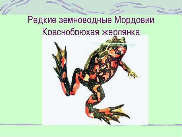 Редкие земноводные Мордовии Краснобрюхая жерлянка