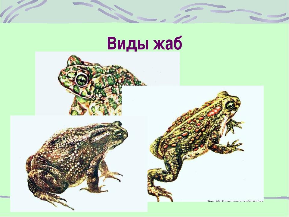 Виды жаб