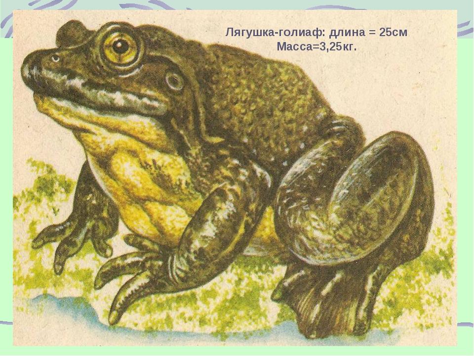 Лягушка-голиаф: длина = 25см Масса=3,25кг.