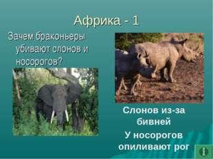 Африка - 1 Зачем браконьеры убивают слонов и носорогов? Слонов из-за бивней У