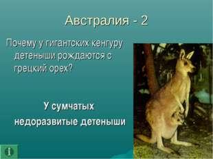 Австралия - 2 Почему у гигантских кенгуру детеныши рождаются с грецкий орех?