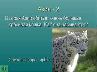 Азия - 2 В горах Азии обитает очень большая красивая кошка. Как она называетс