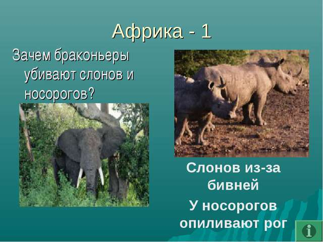 Африка - 1 Зачем браконьеры убивают слонов и носорогов? Слонов из-за бивней У...
